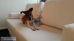 Hund auf Kunstledersofa & Couch